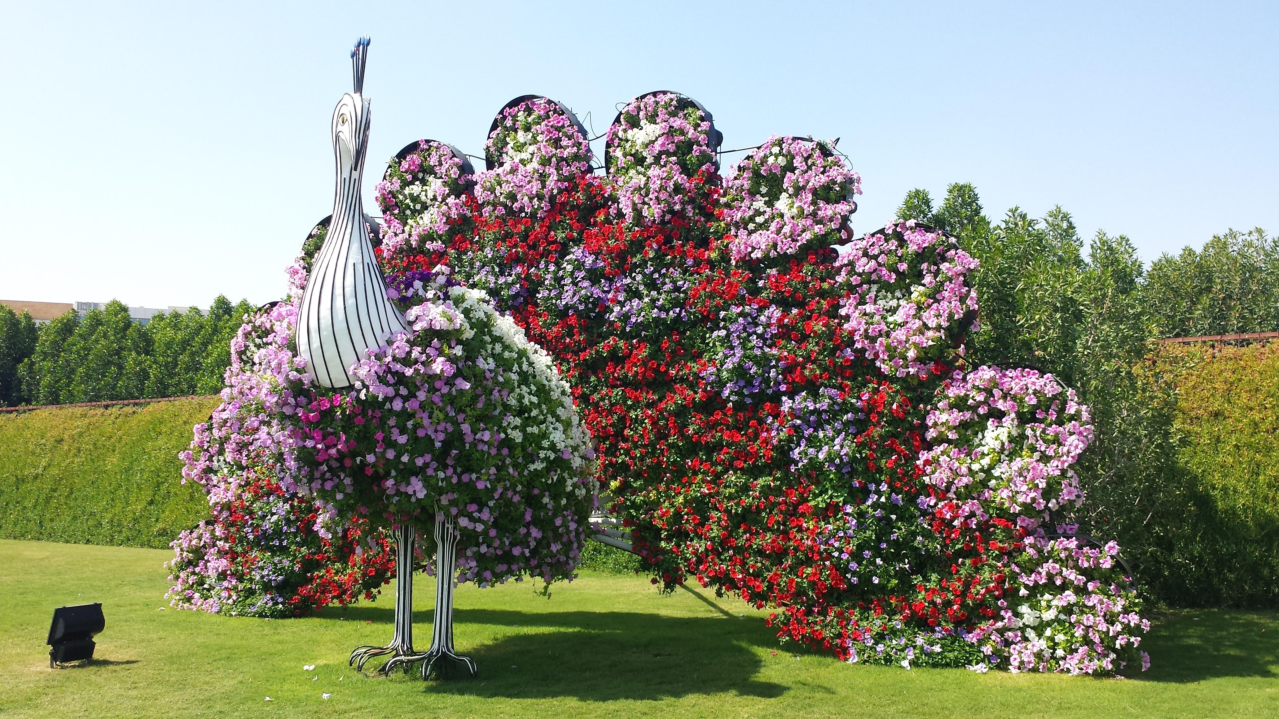 20140222_115202 - Dubai Miracle Garden